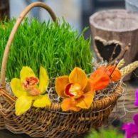 Novruz bayramı
