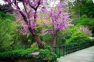 Tbilisi Botanika Bağı