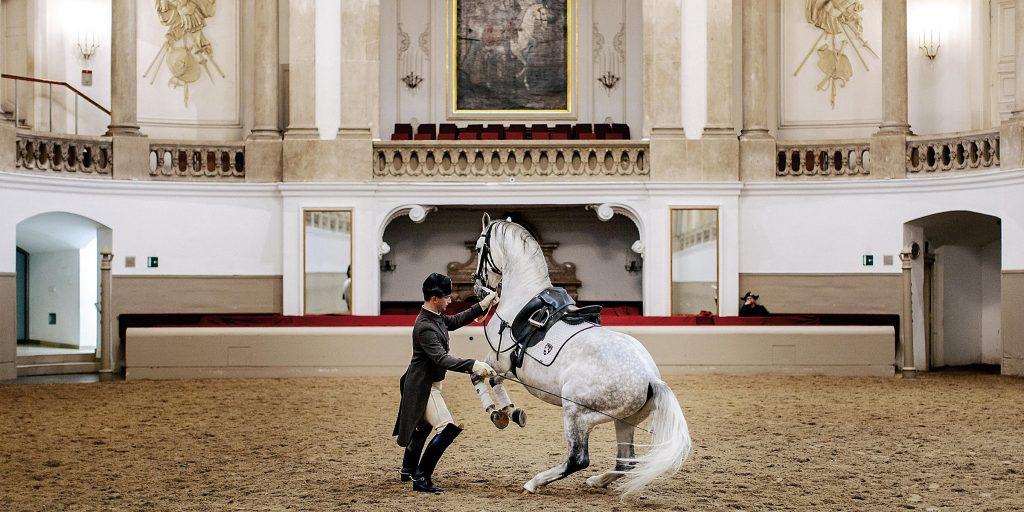 Vyana İspan Atçılıq Məktəbi